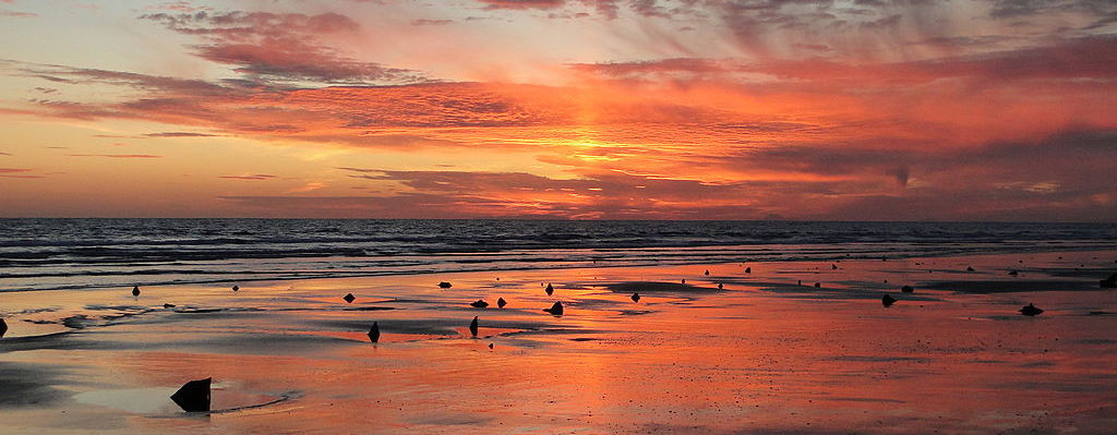 Submerged forest at Borth Sands. (c) Richerman at wikipedia