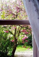 View out of a window to a tree with pink blossom