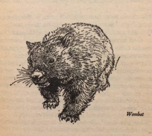 Wombat - ink line drawing by Ralph Thompson for The Silver Brumby
